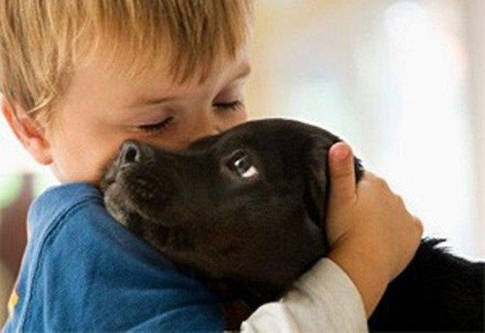 Прививки животным на дому в Москве и МО