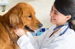 Кастрация и стерилизация собак на дому