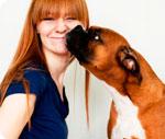 Кастрация собаки на дому