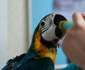 Лечение птиц на дому в Москве