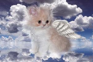 Усыпление и кремация кошек