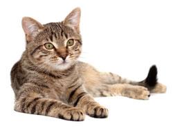 Стерилизация кошки на дому