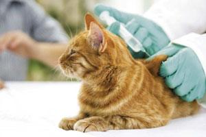 Вакцинация кошек на дому в Москве и МО