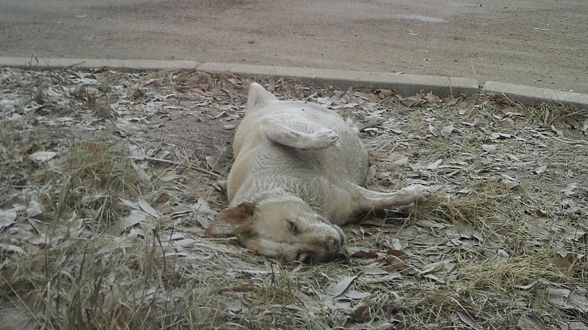 вывоз трупов животных в Москве